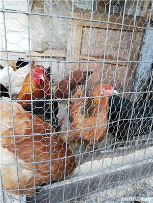 Oua de tara pentru incubat și de consum - imagine 4