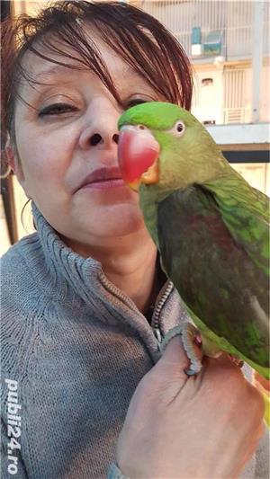 Pui papagali vorbitori 2019 - imagine 5