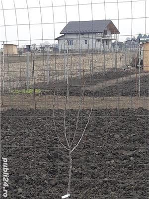 Teren Valea Ursului com Miroslava - imagine 3