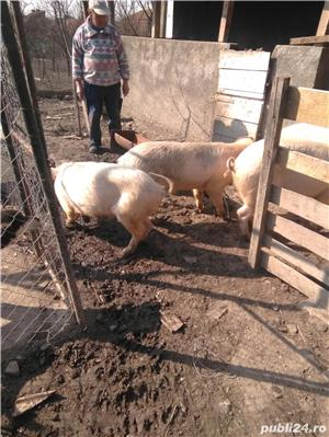 Vând porcii - imagine 8