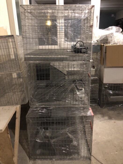 Cusca iepuri reproductie ( rasa uriasa) /160 cm 2019 - imagine 10
