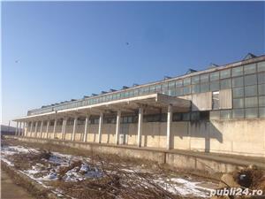 Hala industriala de vanzare - Pricaz - imagine 1
