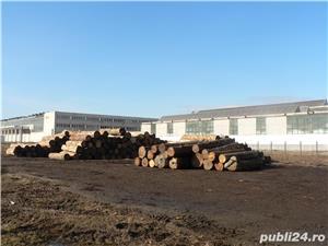 Hala industriala de vanzare - Pricaz - imagine 3