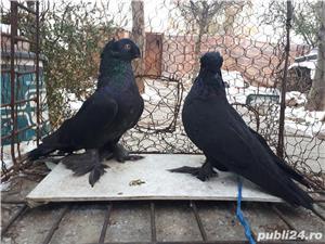 Porumbei Jucatori de Botosani  - imagine 12