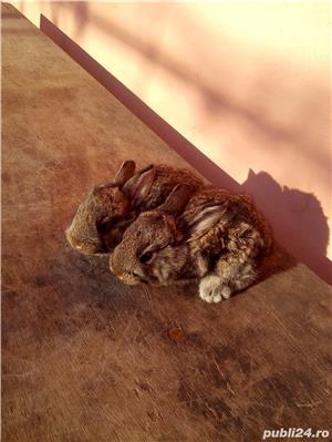 Vand iepuri - imagine 4