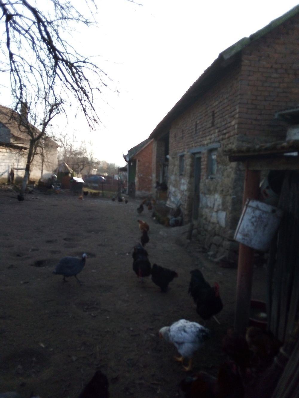OFER spre Vinzare Casa Frumoasa într-o zona forte Bună la 12 km de DEVA Ocupabila Imediat acte regul - imagine 4