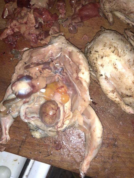 Carne de prepelite BIO crescute la țara cu furaje naturale!  - imagine 8
