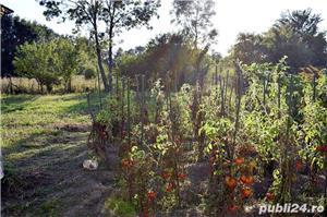 GOSPODĂRIE: 2 case + anexă cu fundație și 2 grădini - imagine 5