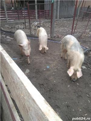 Vând porcii 10 lei kg - imagine 1