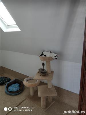 Pensiune pisici - imagine 3