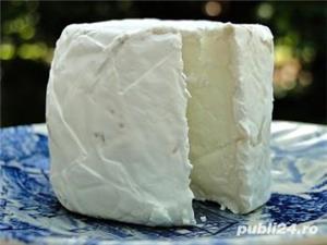 Lapte autentic de capra organic ,proaspat muls curat igienic normal - imagine 4