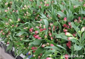 Muncitori la sere si depozite de flori - OLANDA - imagine 4
