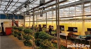Muncitori la sere si depozite de flori - OLANDA - imagine 6