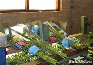 Muncitori la sere si depozite de flori - OLANDA - imagine 3