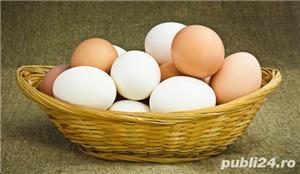 oua de gaini motate de rasa pentru incubat. - imagine 2