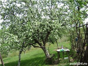Vând gradină cu pomi fructiferi Caransebeș zona Teiuș - imagine 3