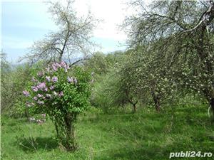 Vând gradină cu pomi fructiferi Caransebeș zona Teiuș - imagine 2