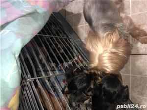 Yorkshire terrier extra mini toy - imagine 2