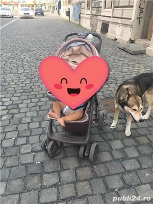 Pierdut/furat caine metis malamut/husky/ciobanesc german - imagine 6
