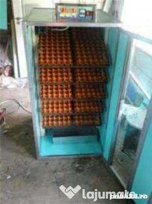 Incubator 30 oua struț automat - imagine 4