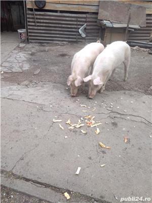 Pork vanzare - imagine 1