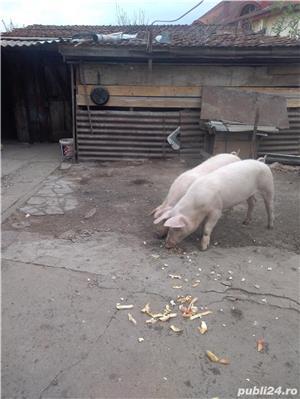 Pork vanzare - imagine 2