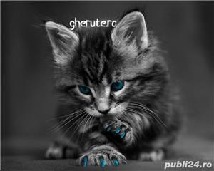 Protectie din silicon gheare pisica - imagine 7