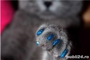 Protectie din silicon gheare pisica - imagine 1