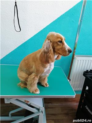 Frizerie Canina , toaletare completa catei, spalat , tuns , periat , taiat unghii , curatat urechi - imagine 2