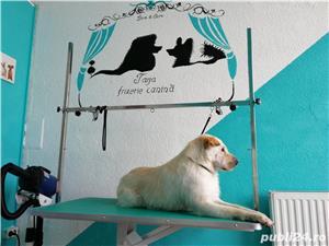 Frizerie Canina , toaletare completa catei, spalat , tuns , periat , taiat unghii , curatat urechi - imagine 3