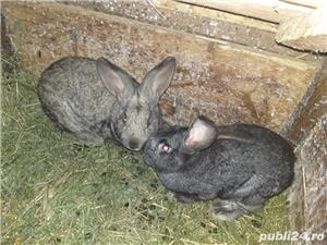 Vand iepuri! - imagine 2