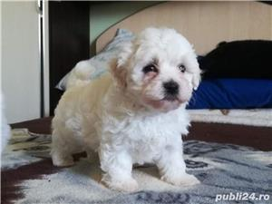 Bichon Maltez Toy - imagine 1