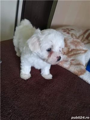 Bichon Maltez Toy - imagine 3