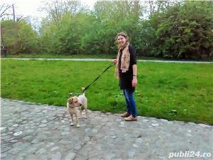 Cazare animale de companie, pet sitting, plimbat caini - imagine 5