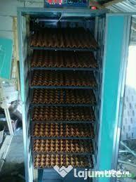 Incubator RA1  1800 oua găină automat - imagine 3