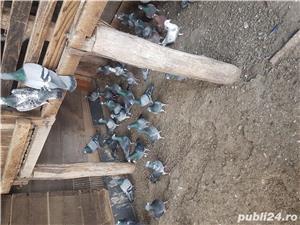Porumbei straini - imagine 4