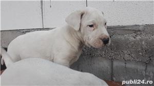 Dog Argentinian - imagine 1