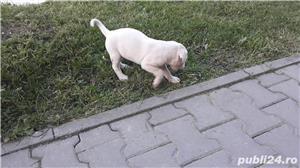 Dog Argentinian - imagine 6