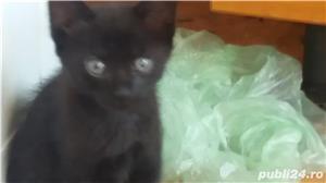 pui de pisica spre adoptie - imagine 2