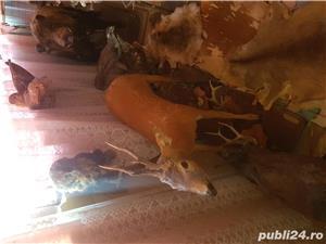 Vand colectie de animale impaiate - imagine 13