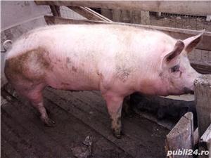 Porc de carne - imagine 2