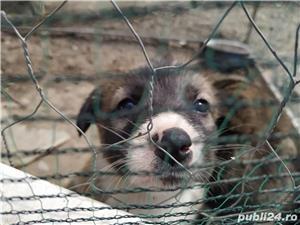 iubiti animalele - imagine 5