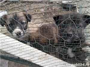 iubiti animalele - imagine 6
