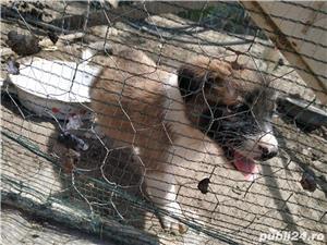 iubiti animalele - imagine 7