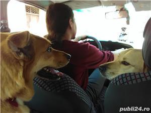 Cazare animale de companie, pet sitting, plimbat caini - imagine 13