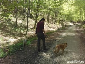 Cazare animale de companie, pet sitting, plimbat caini - imagine 11