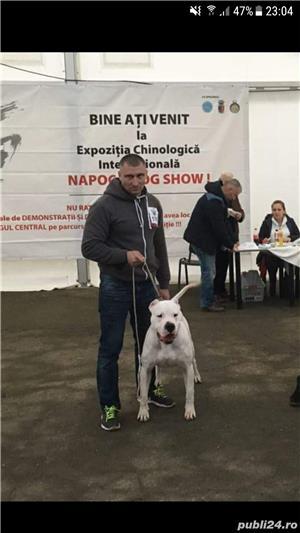 Monta Dogo Argentino  - imagine 7