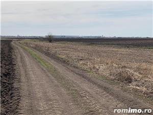 Sacalaz- teren 2ha -400 m distanta de intravilan -35.000 Euro - imagine 2