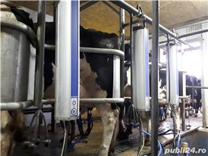 3000 Lei  Ferma de Vaci - imagine 2