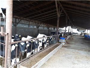 3000 Lei  Ferma de Vaci - imagine 3